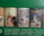 briquets chatons